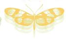 LRG-Butterfly.jpg